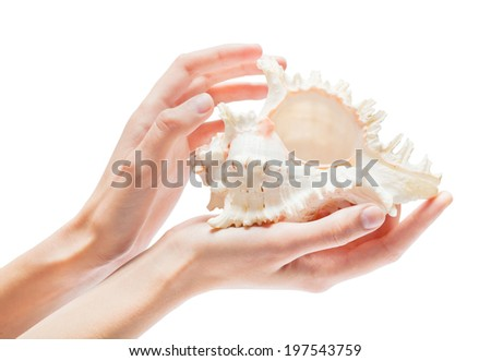 shell in the hands