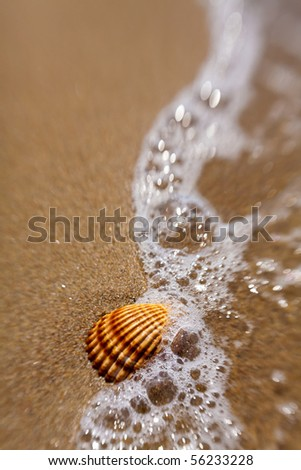 Shell in the sand is covered with foam wave