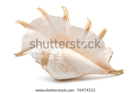 shell isolate on the white background - stock photo
