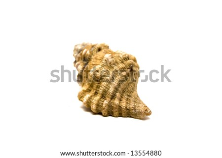 Shell isolated on white - stock photo