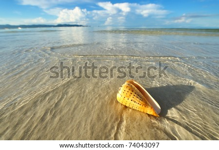 Shell on a beach at low tide - stock photo