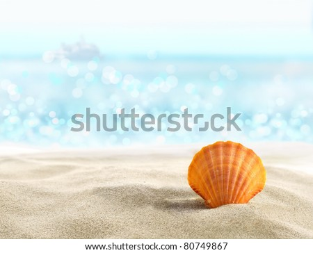Shell on a sandy beach - stock photo
