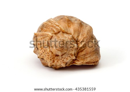 shell on a white background - stock photo