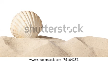 shell on beach isolated on a white background,with a lot of copy-space - stock photo