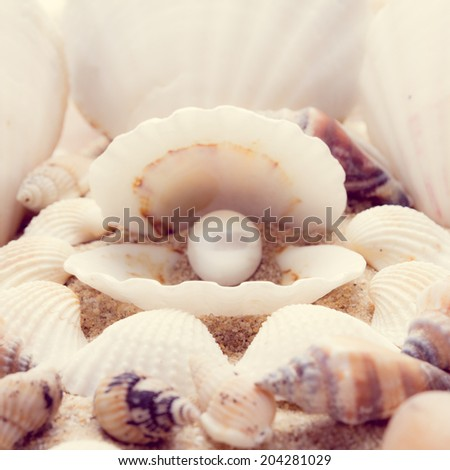 shell on beach  with a instagram filter - stock photo