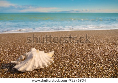Shell on beach with tide at background - stock photo