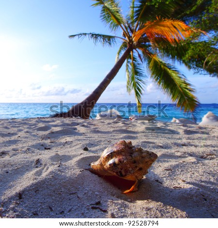 shell on sand under palm - stock photo