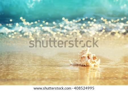 Shell on sandy beach - stock photo
