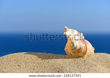 Shell on sandy beach. In the background of sea and sky - stock photo