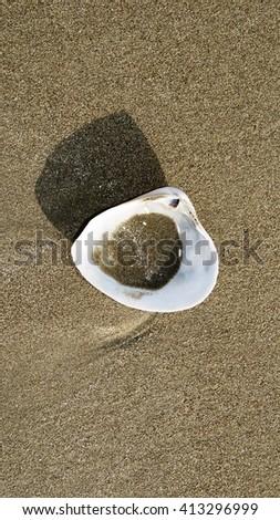 Shell on the beach - stock photo