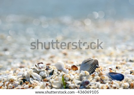 Shell on the beach and sea in background - stock photo