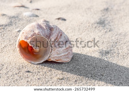 Shell on the beach - copy space - stock photo