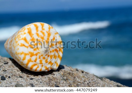 Shell on the beach on a blue ocean background.Summer or vacation concept.Selective focus.Copy space. - stock photo