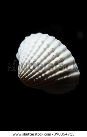 shell on the black