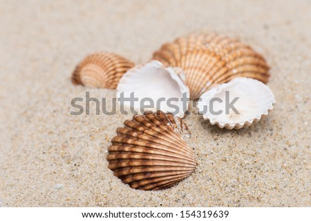 shell on the sand - stock photo