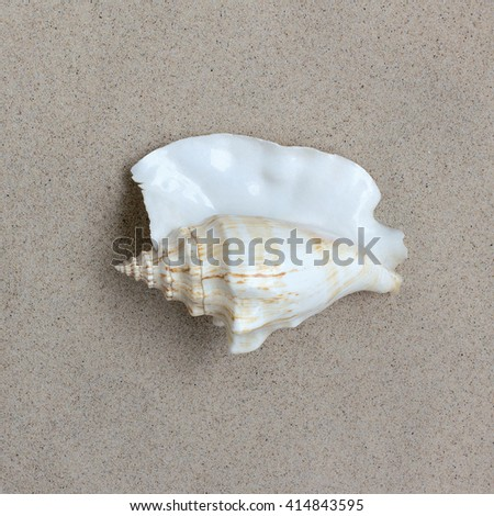 shell on the sand for a photo calendar, exotic object collection