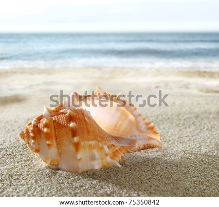 Shell on the sandy beach - stock photo
