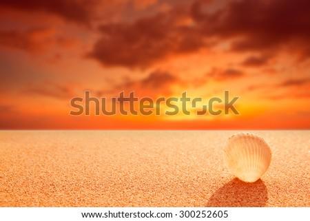 Shell on the sunset beach - stock photo