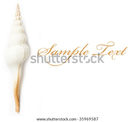 shell on the white isolated background - stock photo