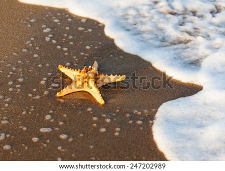 Shell on tropical beach - stock photo