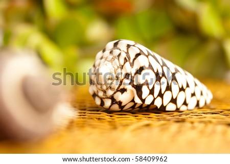 shell on wicker - stock photo