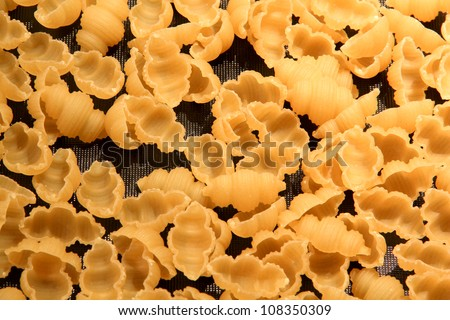 Shell Pasta - stock photo