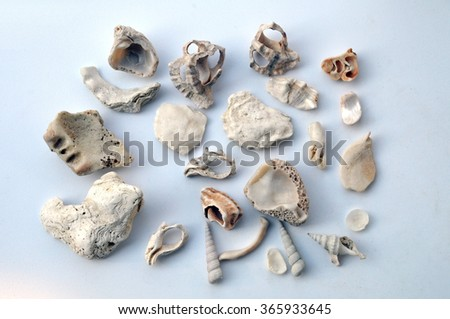Shell remains, shattered to pieces and smoothed  by sea waves and tide - stock photo