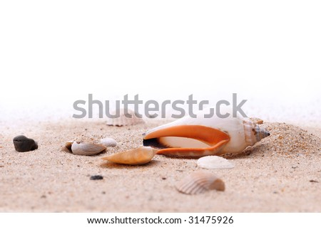 shell sand - stock photo