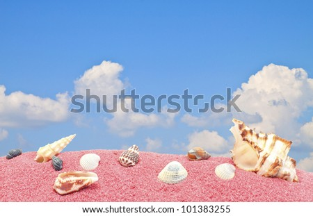 shell sea sand blue sky in summer. - stock photo