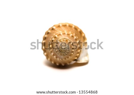 Shell spiral isolated on white - stock photo
