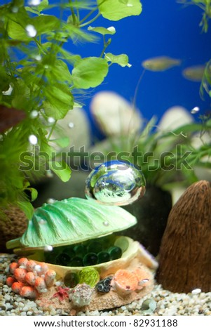 Shell with bubbles decoration og aquarium - stock photo