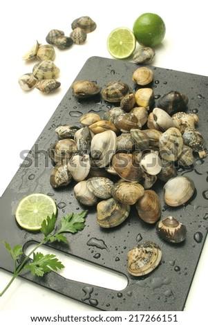 Shellfish clam - stock photo