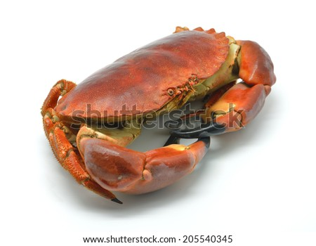 Shellfish: cooked crab isolated in white - stock photo