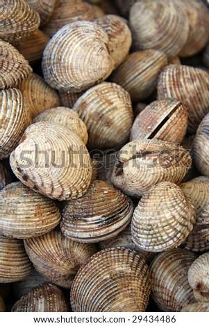Shellfish for sale at a fish market - stock photo