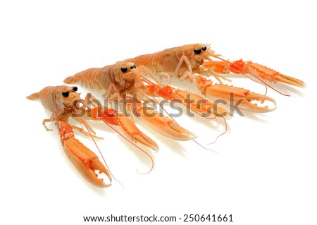 shellfish nephrops isolated on a white background - stock photo