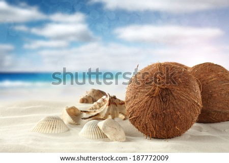 shells and coconuts on sand  - stock photo