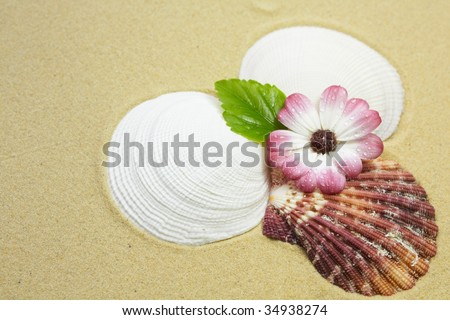 Shells and pink flower with leaf on a sandy beach
