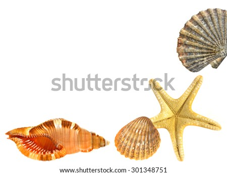 shells and starfish - stock photo