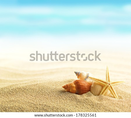 Shells and starfish on sandy beach - stock photo