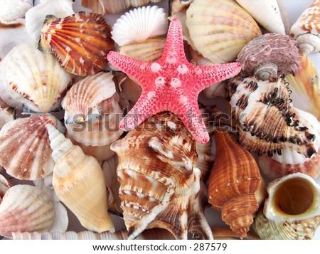 shells and stars - stock photo