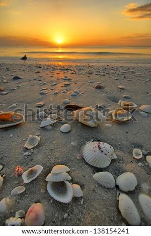 Shells at Sunset, Marco Island Beach, Florida (FL) - stock photo