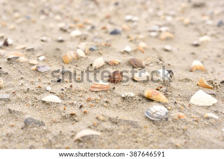 Shells at the beach, selective focus on the foreground with copy space. Sand and sea shells.