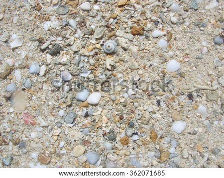 Shells Barnacles and stones Background - stock photo