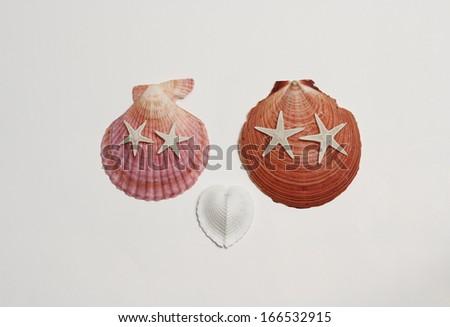 Shells couple - stock photo
