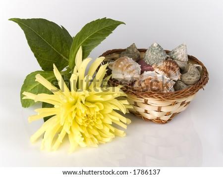 shells in basket - stock photo