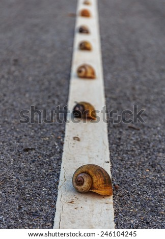 shells in line on the road - stock photo