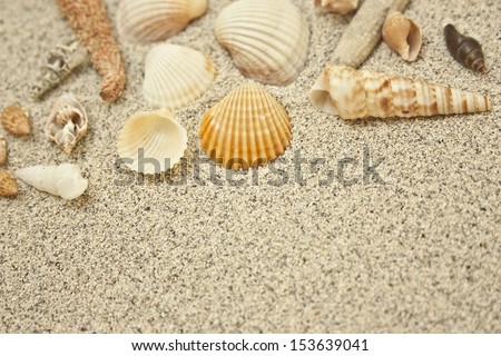 shells in the sand beach