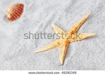 shells in white sand - stock photo