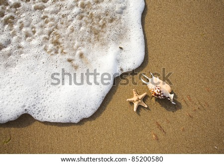 shells lie on the shore near the wave - stock photo
