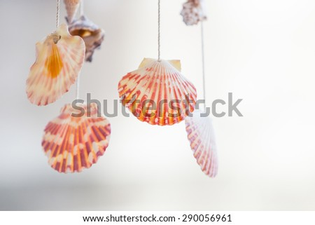 Shells mobile hanging on roof for decoration. - stock photo